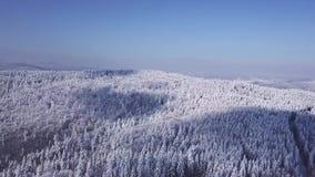 De winterbos in zonnig weer, sneeuwvlokkendaling Lucht Mening stock videobeelden