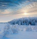 De winterbos in zonsondergangtijd royalty-vrije stock foto's