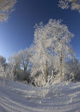 De winterdag Royalty-vrije Stock Foto's
