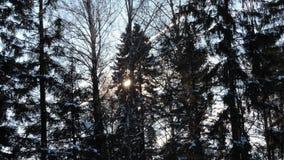 De winterdag in bos stock afbeeldingen