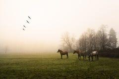 De winterdag in de boerderij Stock Afbeelding