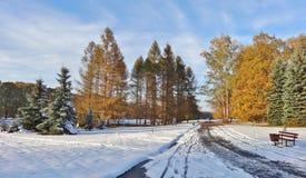 De winterdag - een botanische tuin Royalty-vrije Stock Afbeeldingen