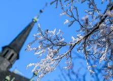 De winterdag, een snow-covered boomtakken tegen de blauwe hemel Stock Afbeelding
