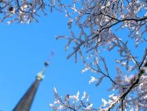 De winterdag, een snow-covered boomtakken tegen de blauwe hemel Royalty-vrije Stock Afbeelding