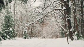 De winterdag in eiken bosje na sneeuwval in December stock video