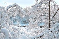De winterdag in het bos Royalty-vrije Stock Afbeeldingen