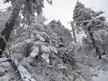 De winterdag in het hout Stock Foto