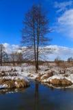 De winterdag van de elsrivieroever Stock Foto