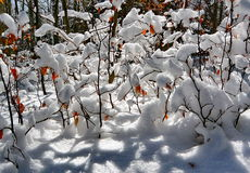 De winterdetail Royalty-vrije Stock Afbeeldingen