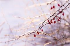 de winterdetails royalty-vrije stock foto's