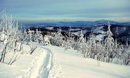 De winterfoot-path met bomen Stock Fotografie