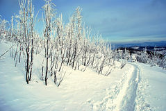 De winterfoot-path met bomen Stock Foto