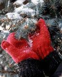 De winterfoto met vuisthandschoenen en spar royalty-vrije stock foto's