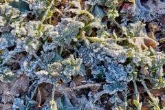 De wintergebied met bevroren bladeren Stock Foto's