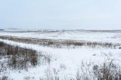 De wintergebied, Mist op het gebied Royalty-vrije Stock Afbeeldingen