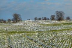 De wintergebieden in de sneeuw De winter Tarwe royalty-vrije stock afbeeldingen