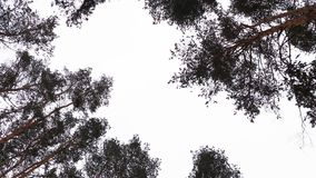 De winterhemel in het bos Royalty-vrije Stock Foto