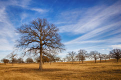 De winterhemel van Texas Stock Afbeelding