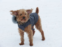De winterhond Royalty-vrije Stock Afbeeldingen