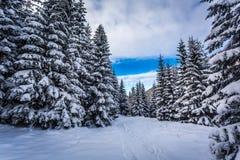 De winterhoogtepunt van de weg van de sneeuwberg Stock Afbeelding