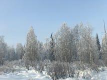 De winterhout Stock Foto