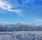 De winterhout Stock Afbeeldingen
