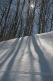 De winterhout Royalty-vrije Stock Afbeelding
