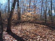De winterhout stock foto's