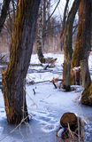 De winterhout Stock Fotografie