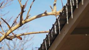 De winterijskegels die op het Dak onder de de Lentezon smelten en van hun Uiteinden druipen stock video