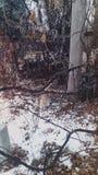 De winterkat royalty-vrije stock foto