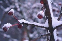 De winterkers Stock Fotografie