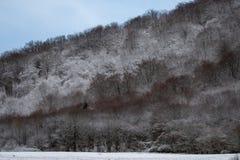 De winterkleuren stock afbeelding