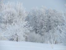 De winterkleuren Royalty-vrije Stock Fotografie