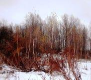 De winterlandschap (зиР¼ Ð ½ иР¹ Ð ¿ Ð?Ð ¹ заж) Stock Afbeeldingen