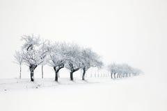 De winterlandschap Stock Afbeeldingen
