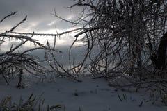 De winterlandschap Stock Fotografie