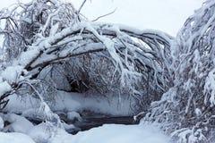 De winterlandschap in de bergen stock foto's