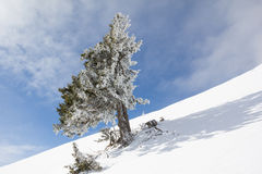 De winterlandschap bij MT Dobratsch royalty-vrije stock afbeelding