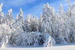 De winterlandschap - bomen in sneeuw Stock Foto's