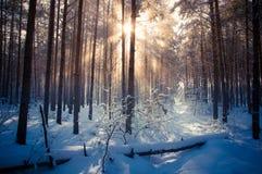 De winterlandschap, bomen in sneeuw worden behandeld die Royalty-vrije Stock Afbeelding
