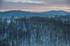 De winterlandschap in de boszonsondergang Royalty-vrije Stock Afbeelding