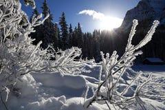 De winterlandschap in Canada, Meer Louise Snowflakes op installaties wordt bevroren die Royalty-vrije Stock Foto