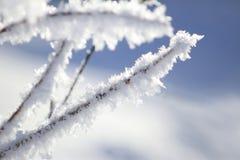 De winterlandschap in Canada, Meer Louise Snowflakes op installaties wordt bevroren die Stock Afbeeldingen