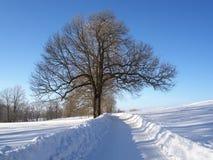 De winterlandschap dichtbij Nova Ves-nad Nisou Royalty-vrije Stock Foto's