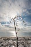 De winterlandschap die het overzees overzien Na het bevriezen regen uit kwam de zon De boom in het ijs tegen de hemel royalty-vrije stock foto