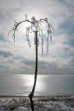De winterlandschap die het overzees overzien Na het bevriezen regen uit kwam de zon De boom in het ijs tegen de hemel stock afbeelding