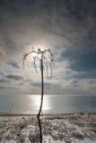 De winterlandschap die het overzees overzien Na het bevriezen regen uit kwam de zon De boom in het ijs tegen de hemel stock foto