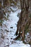 De winterlandschap in een canion Royalty-vrije Stock Afbeelding