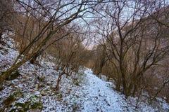De winterlandschap in een canion Stock Foto